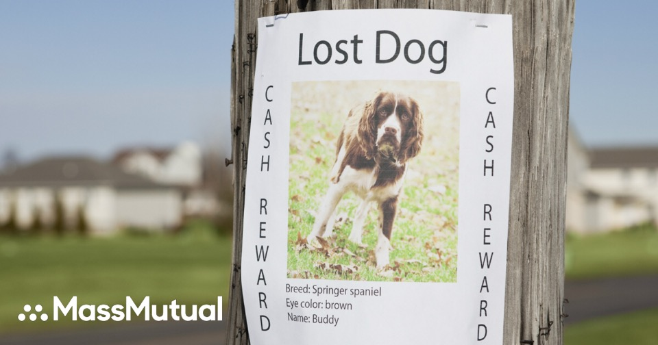 Living Mutual: The Lost Pet